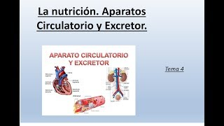 Funciona sistema y el sistema excretor como circulatorio