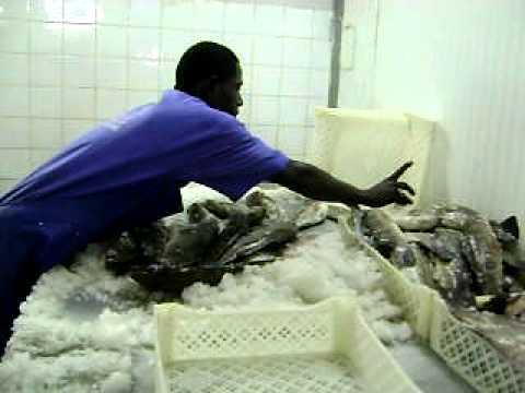 Fresh Fish Exporter.AVI