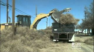 Tumbleweeds bury New Mexico town