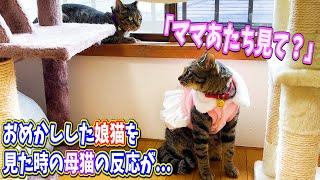 おめかしした娘猫を見た時の母猫の反応が・・・