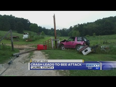 Crash leads to bee attack