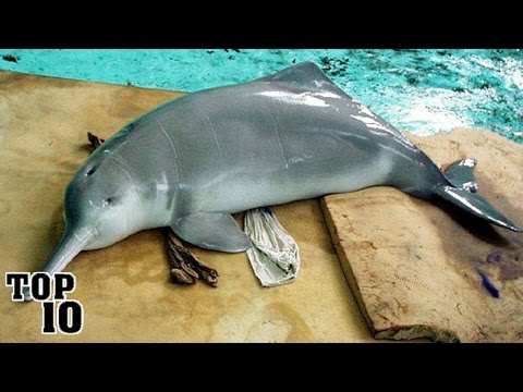 Top 10 Recently Extinct Animals