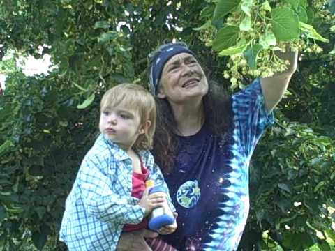 Linden Flower Harvest
