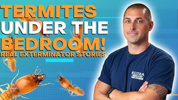 Termites Under The Bedroom | Real Exterminator Stories!