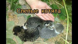 Слепые котята.