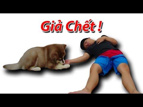 NTN - Giả Chết Thử Lòng Cún Con Alaska ( Playing Dead With Dog )