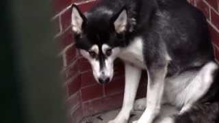 RSPCA Video - The Dog Rescuers: Series 2, episode 10