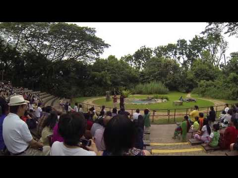 Singapore Jurong Bird Park's Kings of the Skies show - حديقة الطيور جورونغ سنغافورة