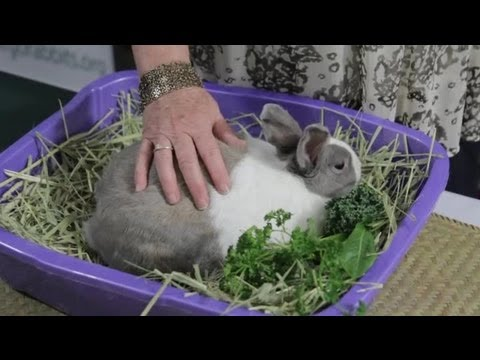What Are Some Signs That a Momma Rabbit Is Feeding Her Newborns? : Rabbit  Care