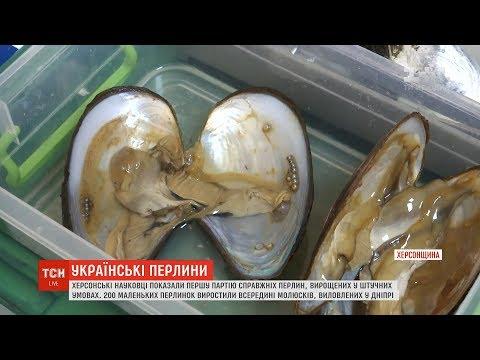 ТСН: Науковці з херсонського університету вперше в Україні виростили перлини