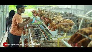 Poultry farming with modern facilities (Furnished cage)