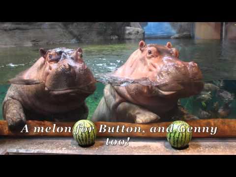 'Twas the Night Before Christmas at Adventure Aquarium