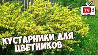 видео Форзиция: посадка и уход в открытом грунте, в Сибири