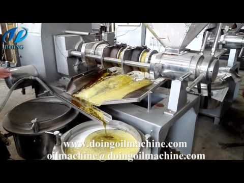 Rapeseed oil press machine working video