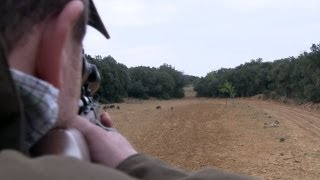 The Shooting Show -- French wild boar hunt and Richard Ali interviewed