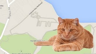 Giant Cat Mysteriously Appears On Google Maps