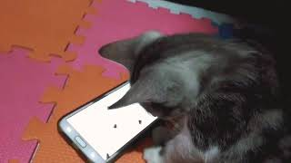 Kitten plays android games