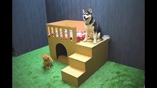 Как сделать дом из картона для собаки или кота