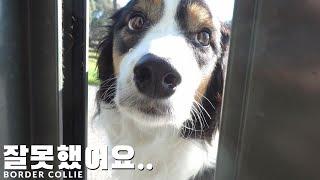 말 안듣는 강아지의 최후.. [4K]
