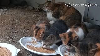 어미고양이모성애 #어미를부르는 아기고양이 울음소리