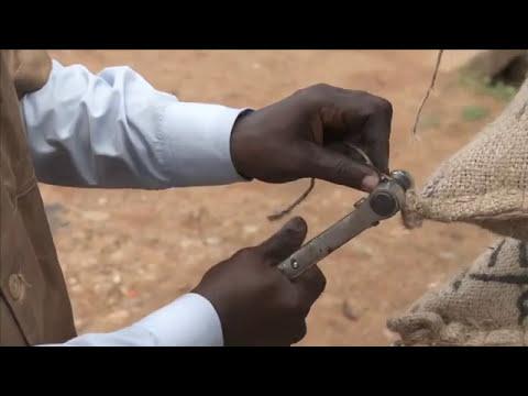 Felchlin Cacao Anbau, Ernte und Transport