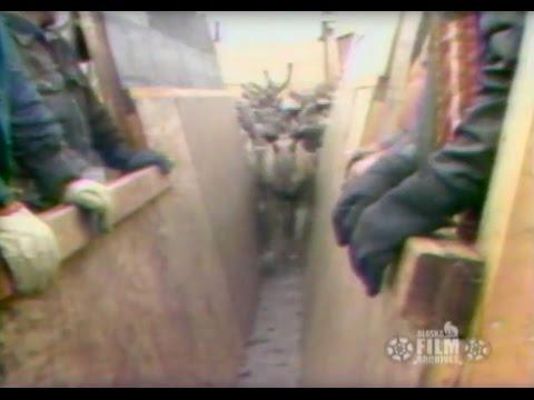 Reindeer (1978)
