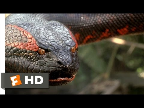 Anaconda (8/8) Movie CLIP - Swallowed Whole (1997) HD Travel Video