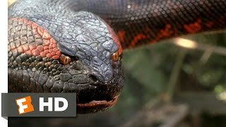 Anaconda (8/8) Movie CLIP - Swallowed Whole (1997) HD