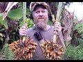 Turmeric Harvest