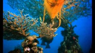The Cousteau Collection - The Silent World - Trailer