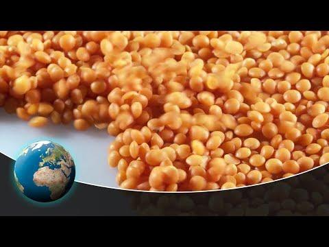 Lentils - The