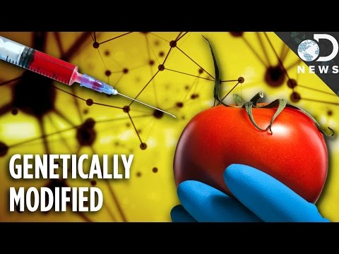 Are Any Foods Natural Anymore? GMOs Explained