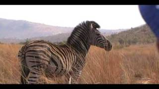 詳細は http://www.libero2010.net/ で。南アフリカ共和国のピーランス...