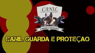 CANIL GUARDA E PROTEÇAO - AKIRA DO GUARDA E PROTEÇAO