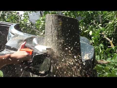Вопрос: Дерево испытывает боль, когда его спиливают?