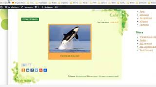 видео Исключаем категории из архива или с главной страницы WordPress