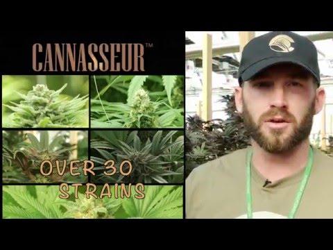 Cannasseur Organic Cannabis