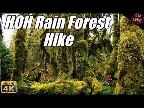 HOH Rainforest Olympic National Park Hall of Moss Adventure Hike 4K