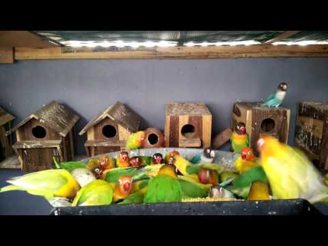 how to train your green cheek conure not to bite