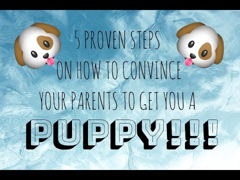 HOW TO CONVINCE YOUR PARENTS TO GET YOU A DOG!! *fool Proof Steps!*