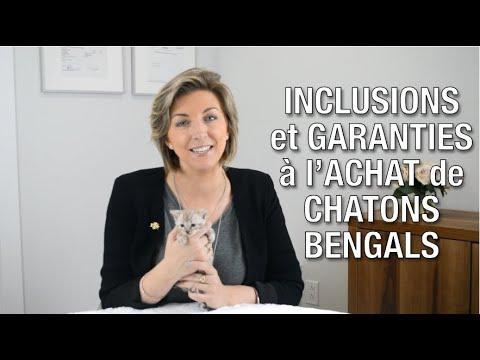 Inclusions Et Garanties à L'achat D'un Chat Bengal - Chatterie Bengal Laurentides