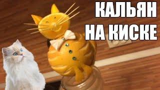кальян на кошках, как сделать красивую чашу из грейпфрута