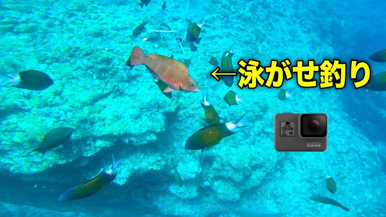 【クイシ水中】泳がせ釣りにGoPro付けて落としてみた結果...