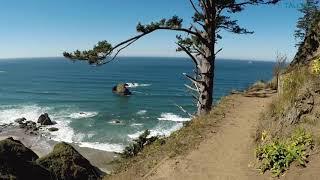 Oregon Coast Views Forest Beach trees Ocean  Rocks