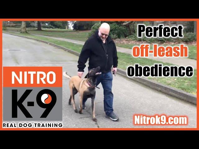 Perfect obedience: Nitro K9 student, level 2 graduation