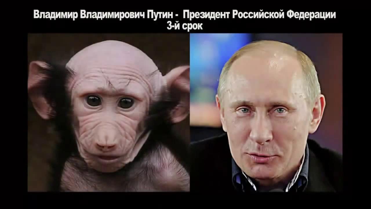 Юмор Забавные сходства : Политики России . Прикольные фото ...