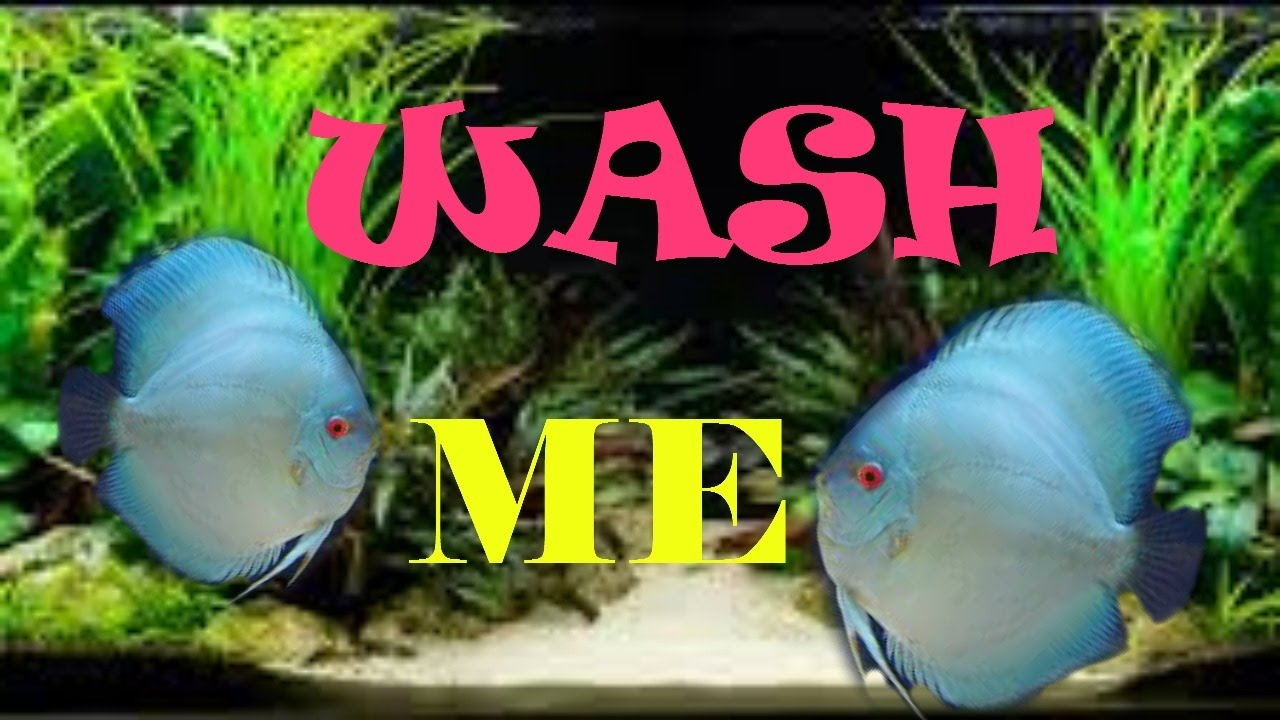 How to clean my discus fish tank aquarium care maintenance for How to take care of fish tank