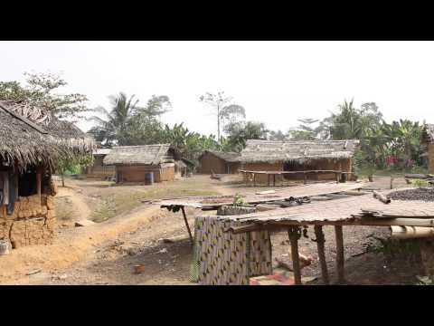 Ghana's Gold: Cocoa