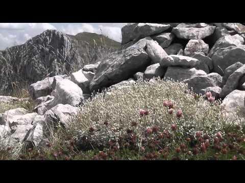 Monte Marsicano - Parco Nazionale d'Abruzzo, Lazio e Molise