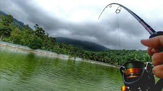 Redtail Catfish GERGASI 16.10kg ( Senwell Fishing Park )
